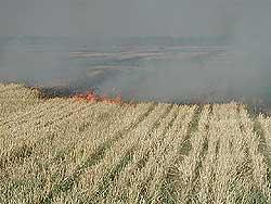 Спалювання стерні — шкідливе і незаконне